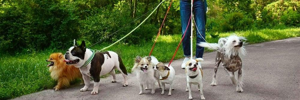 estudiar-trabajar-pasear-perros.jpg